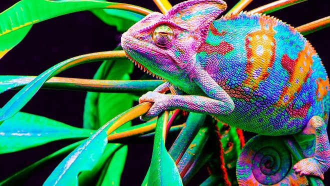 Want to be a manager? Be a chameleon-Hays careers advice